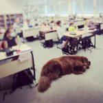 Schulhund Oskar